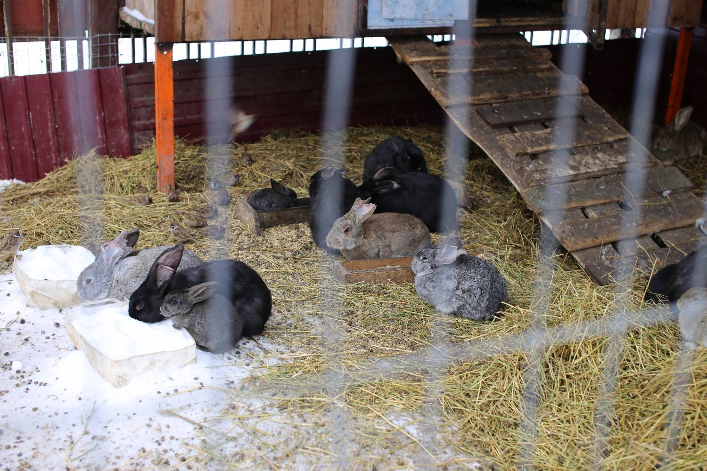 Как разводить кроликов новичку в домашних условиях и содержать их