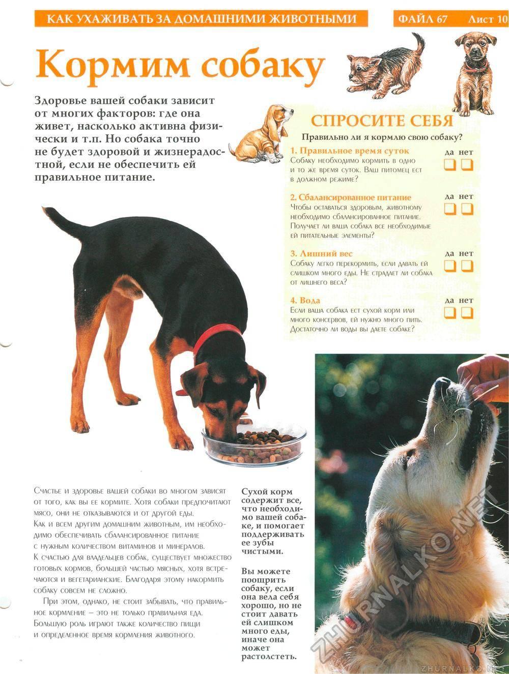 Мопс: уход и содержание щенка в домашних условиях и в квартире, а также как чистить уши и проводить стрижку под машинку
