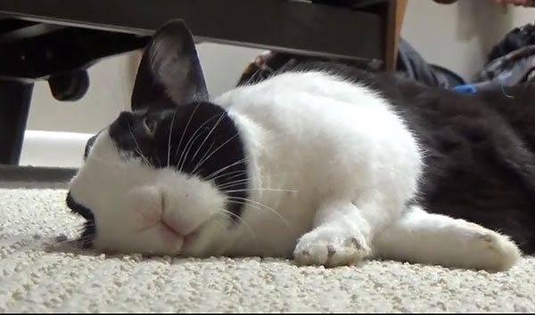 Сон кроликов: как засыпают, где и сколько спят
