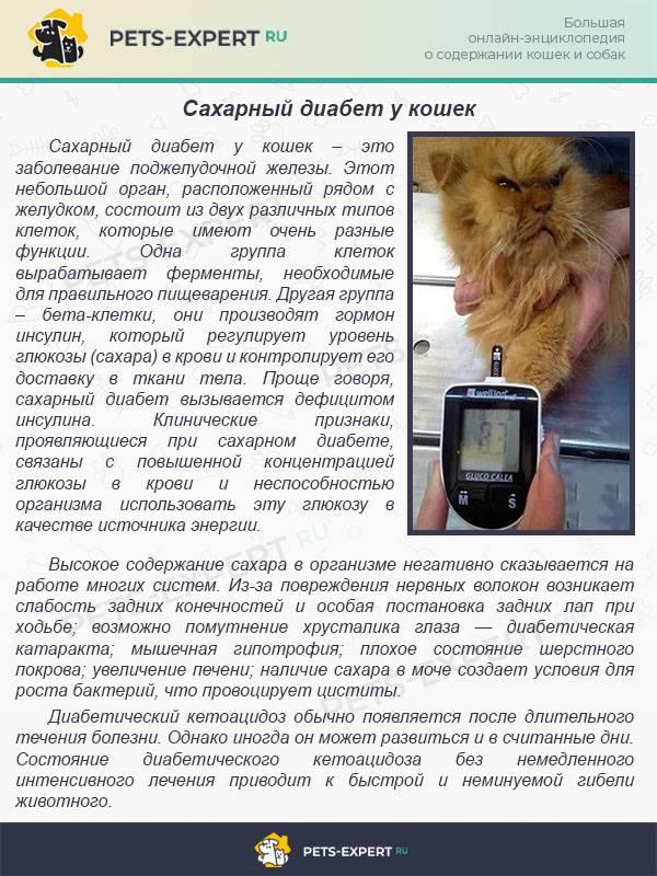 Гипертиреоз у кошек: метимазол, симптомы и лечение