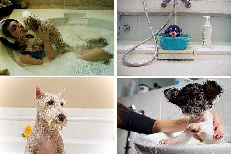 Можно ли мыть собаку человеческим шампунем | для людей, детским, обычным