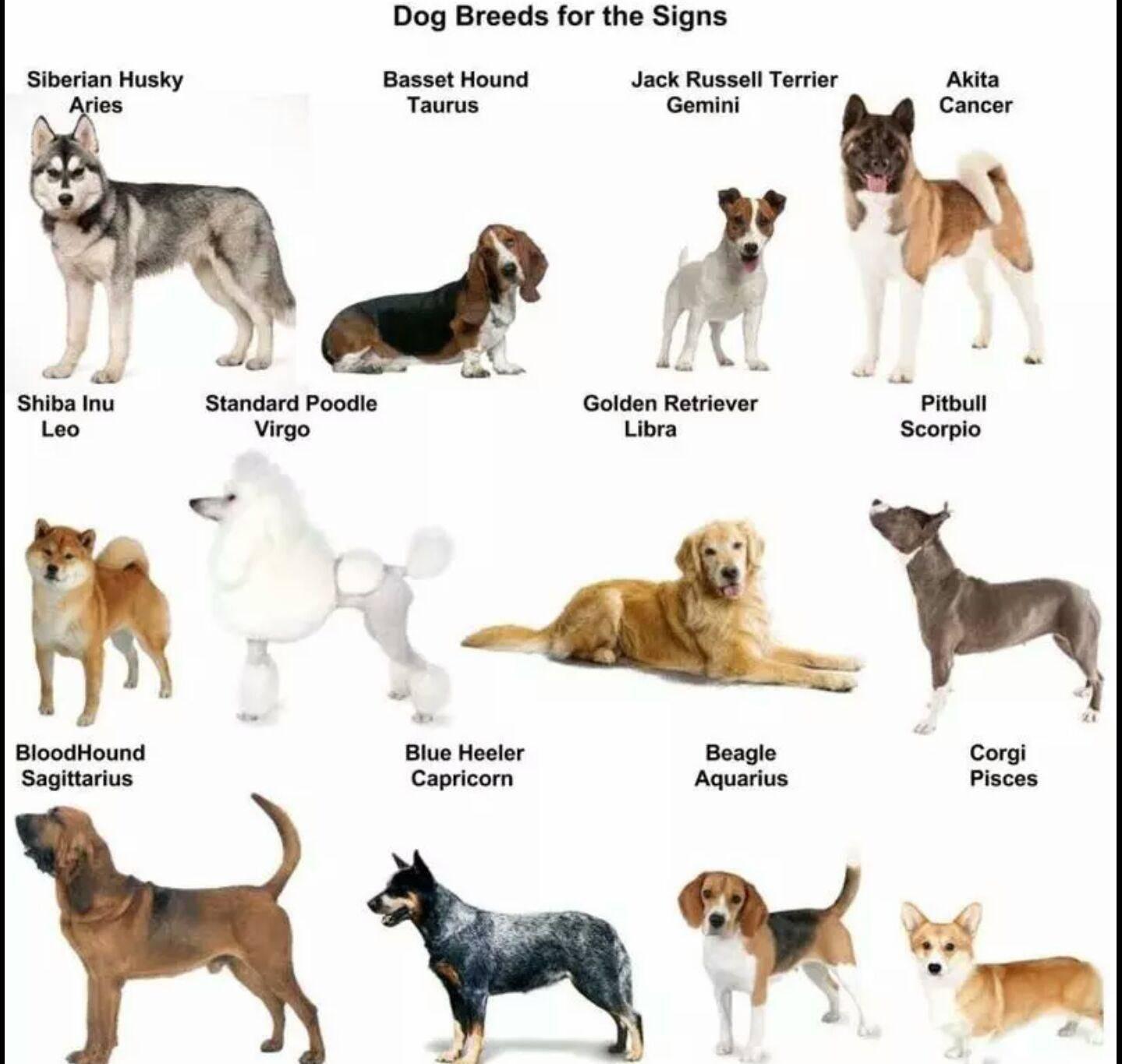 Как выбрать собаку по знаку зодиака