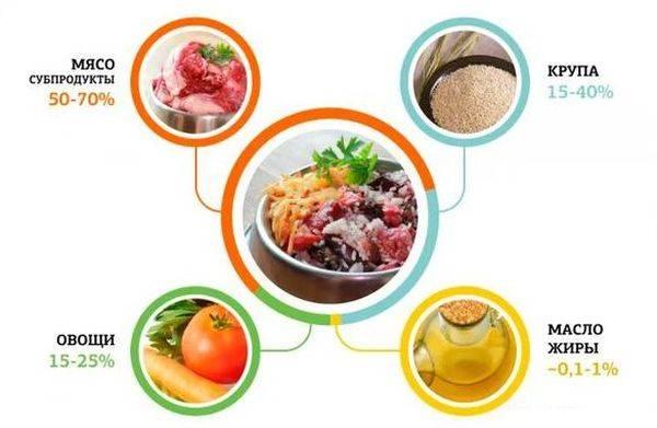 Чем кормить чихуахуа в домашних условиях: чем, как и сколько раз кормить
