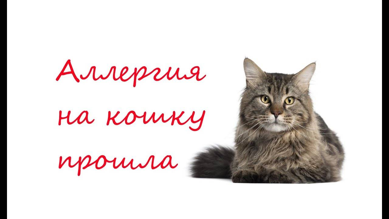 Внешние признаки появления у кошки аллергии на корм: чем лучше кормить