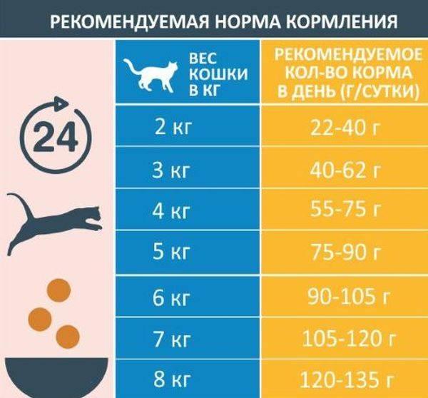 Как правильно кормить котенка в 1 месяц без мамы в домашних условиях