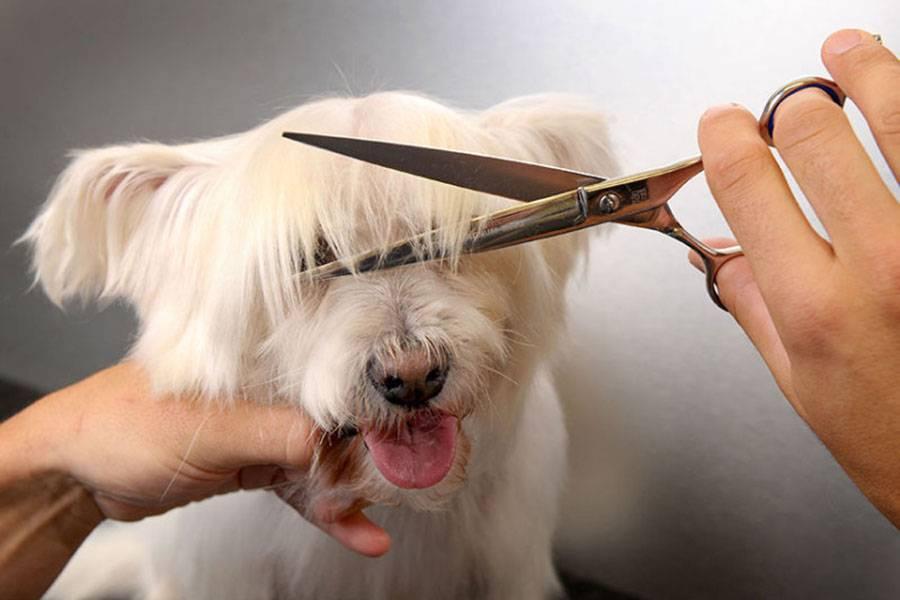 Как подстричь йорка в домашних условиях: инструменты и варианты стрижек