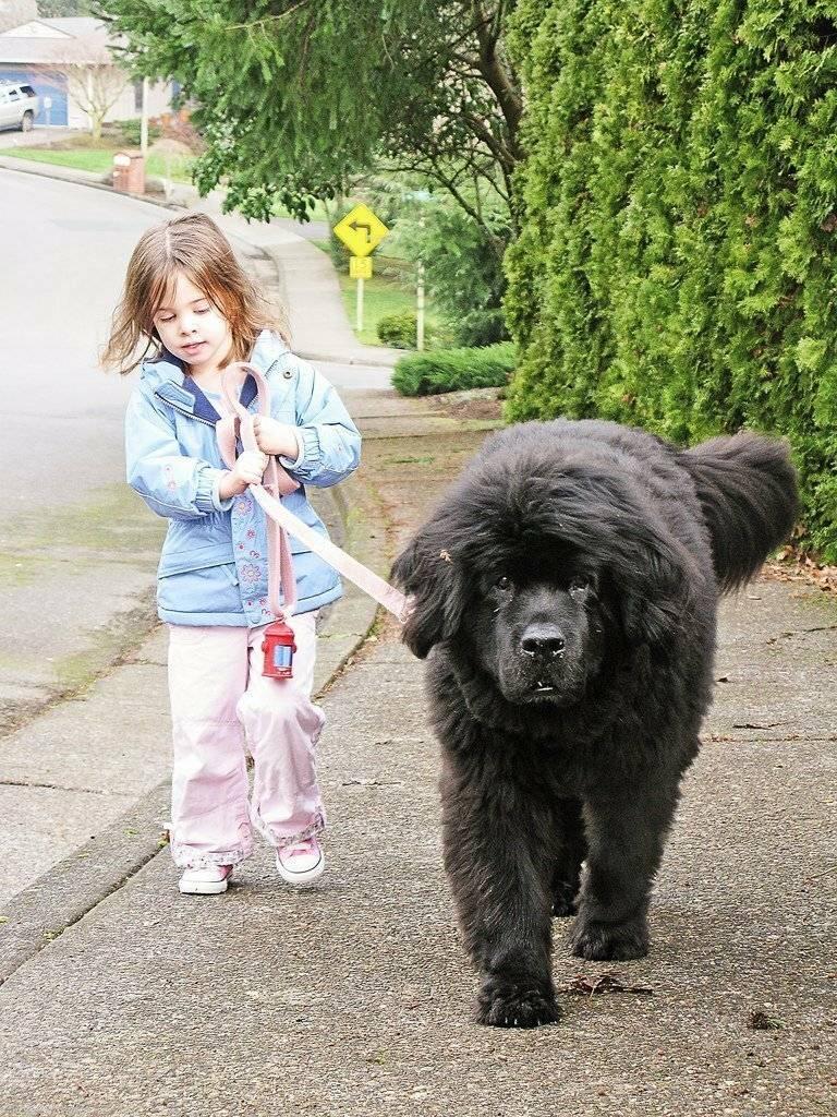 Топ-10 собак для пожилых и одиноких людей: фото и описания пород