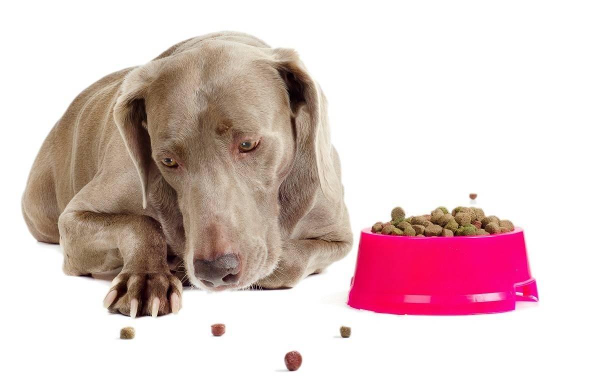 Собака не ест и отказывается от еды (вялая или активная) - причины и что делать 2020