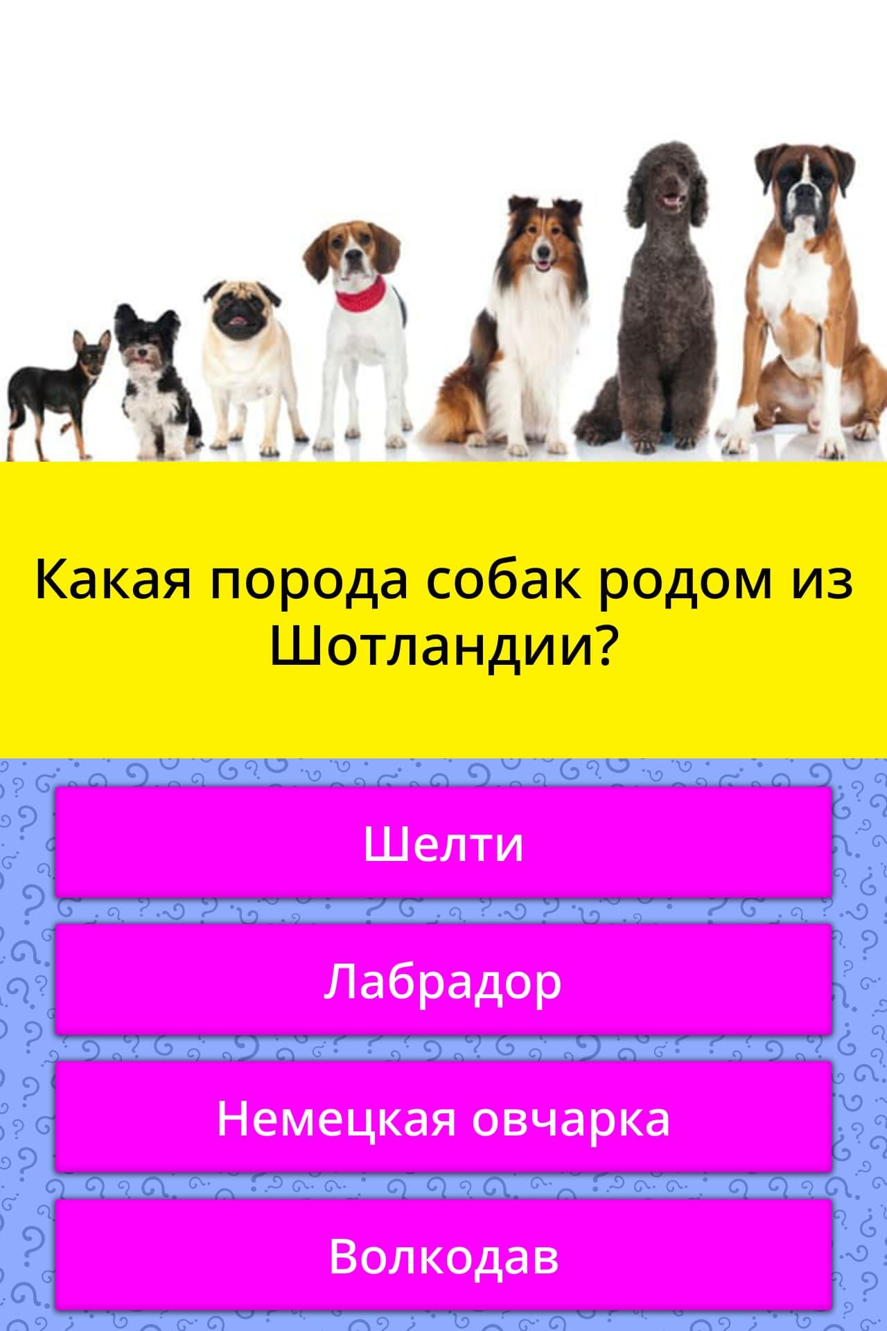 Топ 7 русских пород