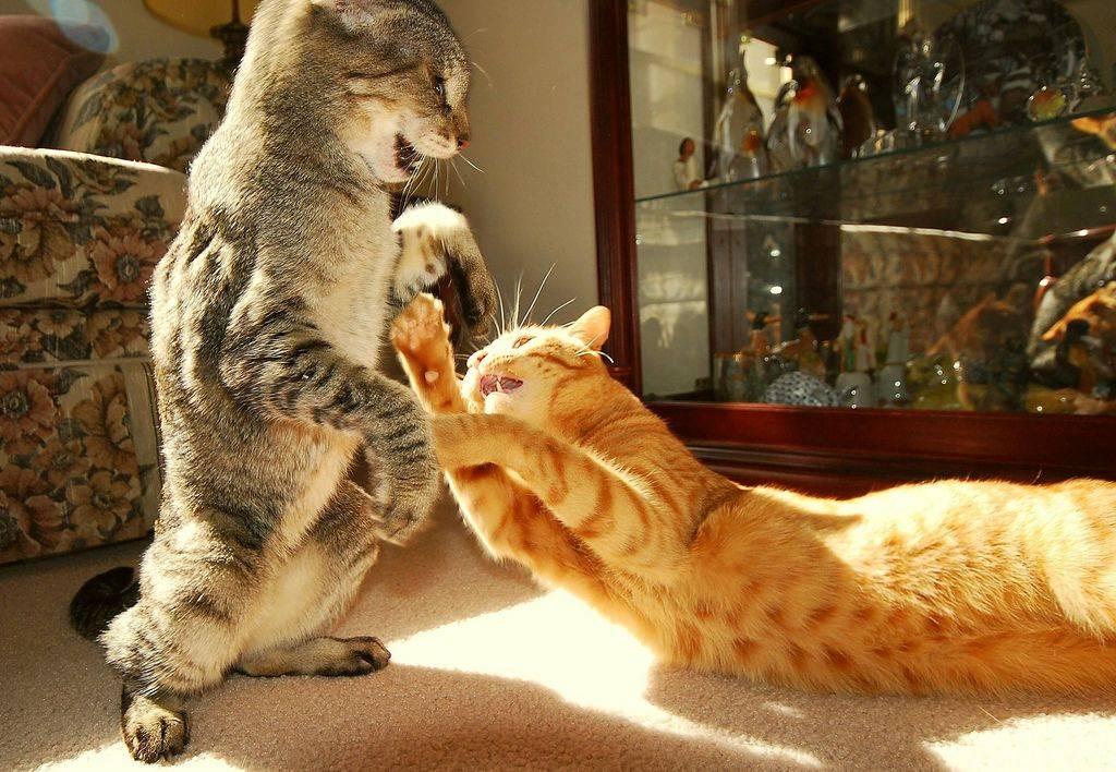 Как отучить кота кусаться или царапаться: причины агрессии, что делать если животное нападает, рекомендации по методике воспитания