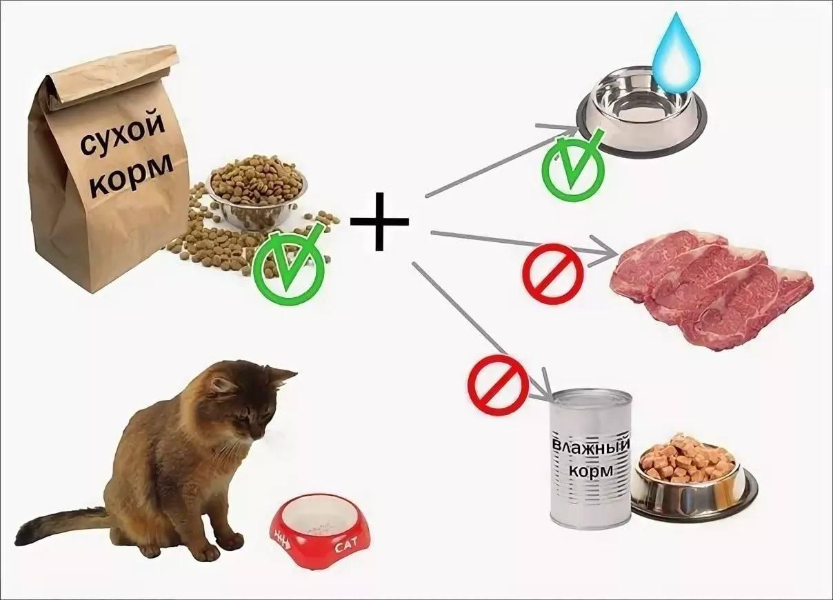 Можно ли кошкам сухой и влажный корм?