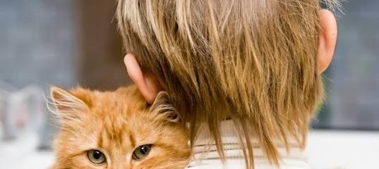Понимают ли кошки человеческую речь