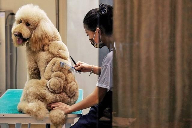 Все о профессиях, связанных с собаками