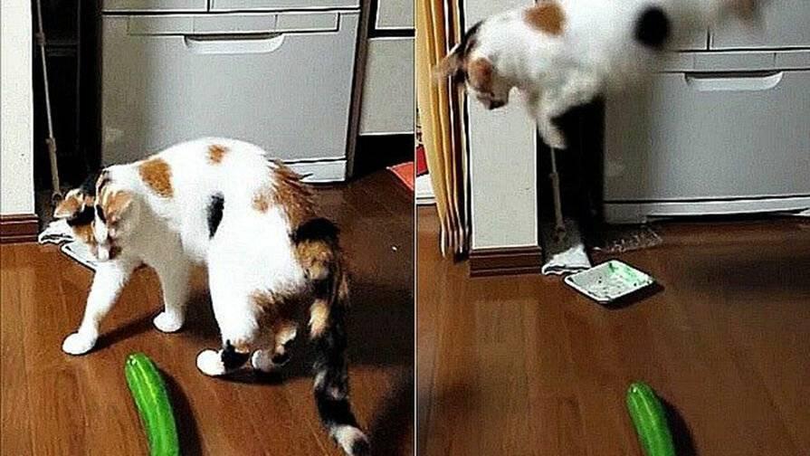 Чего боятся кошки и коты