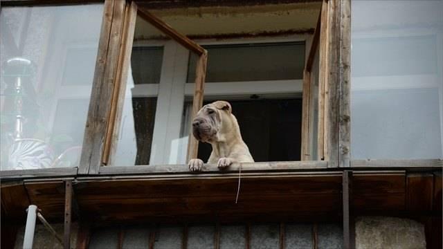 К чему по приметам воет собака во дворе ночью и что с этим делать
