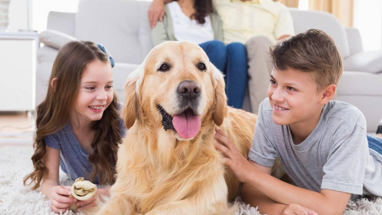 Какую собаку лучше всего завести в частном доме с детьми