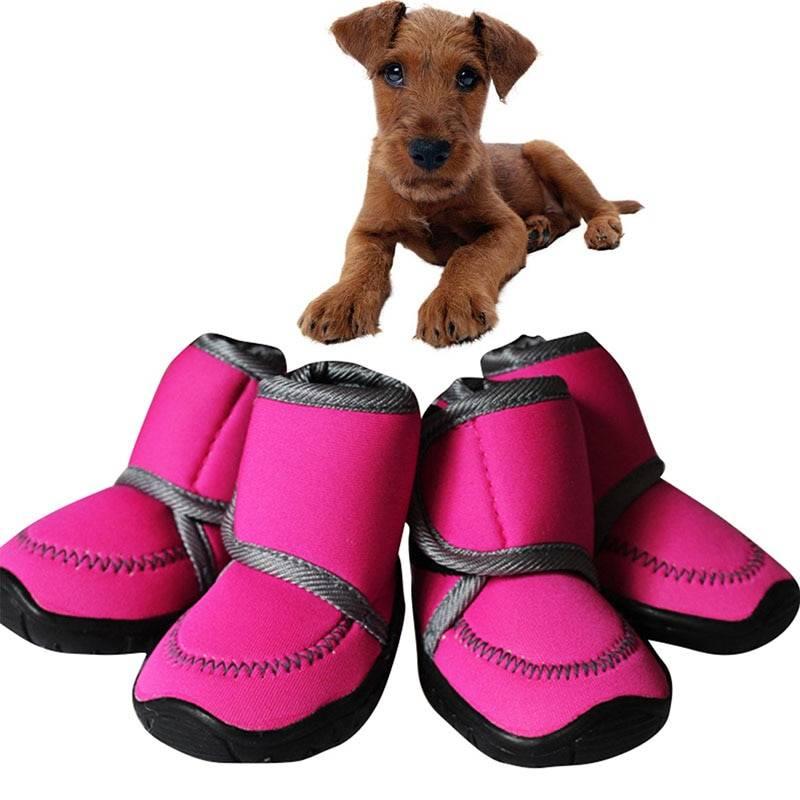 Виды обуви для маленьких собак, советы при выборе