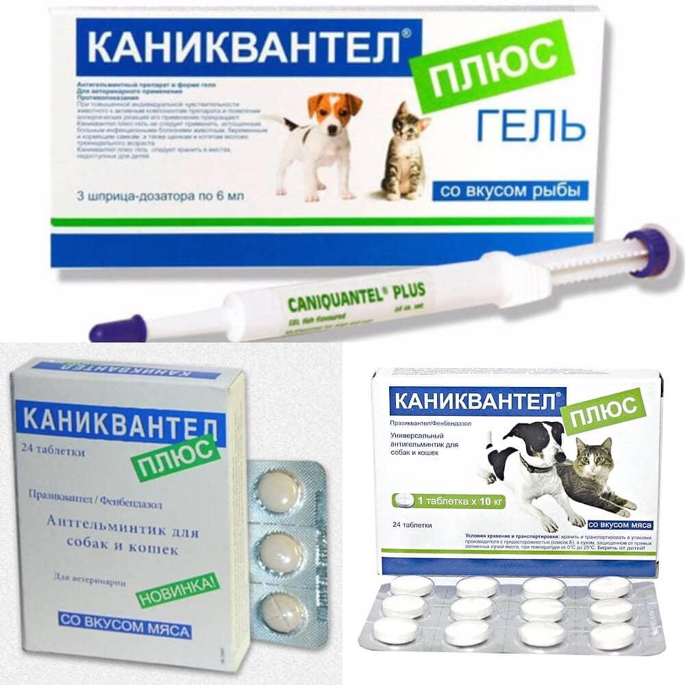 """""""каниквантел"""" для кошек: показания, инструкция по применению ? лечение"""