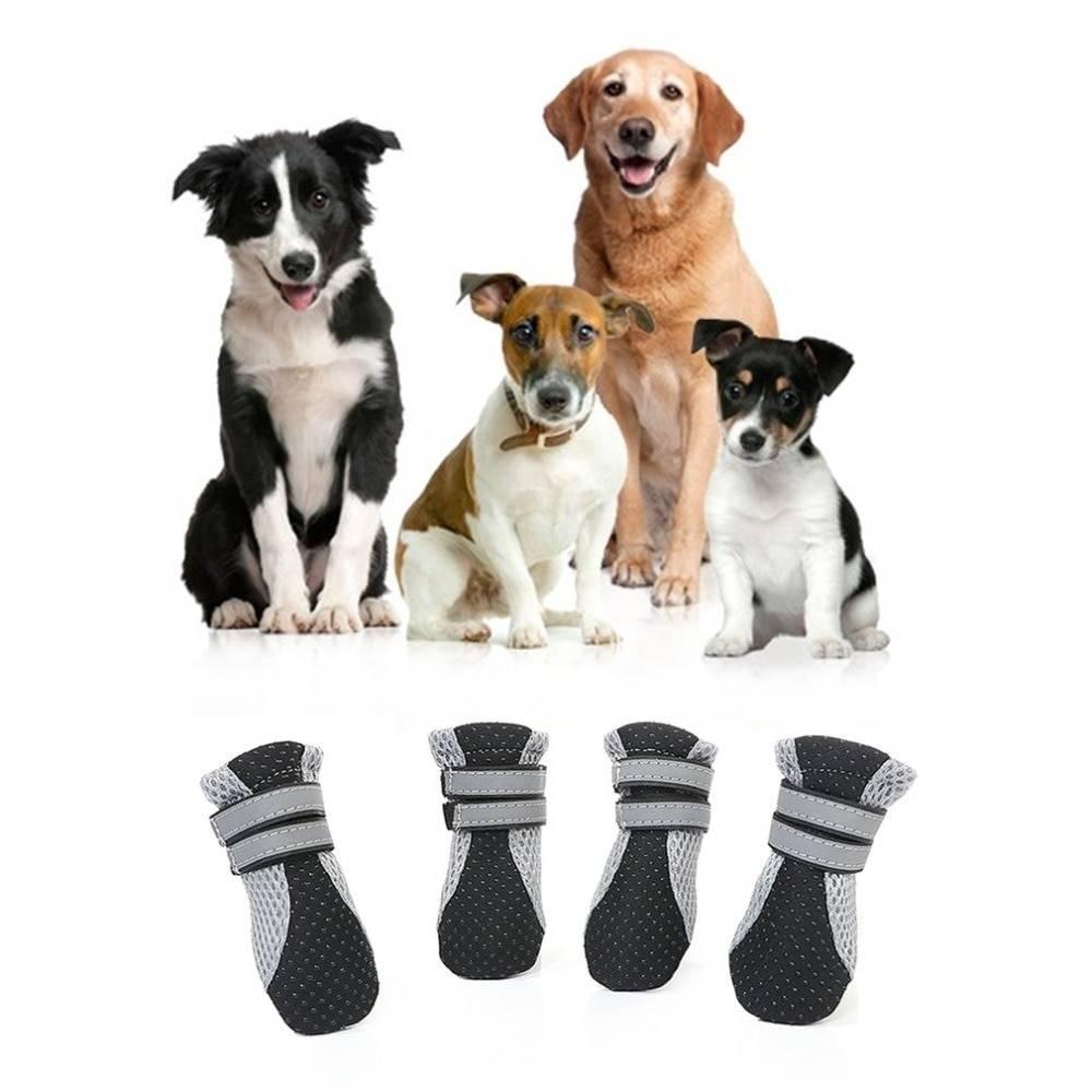 Для чего собаке обувь?