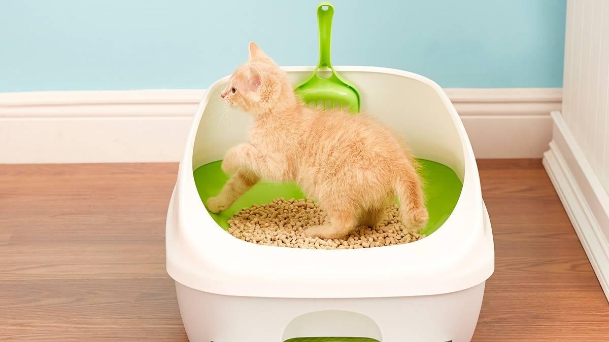 Как приучить котенка или взрослую кошку ходить в лоток: быстро, правильно, с наполнителем или без, в доме или на улицу?