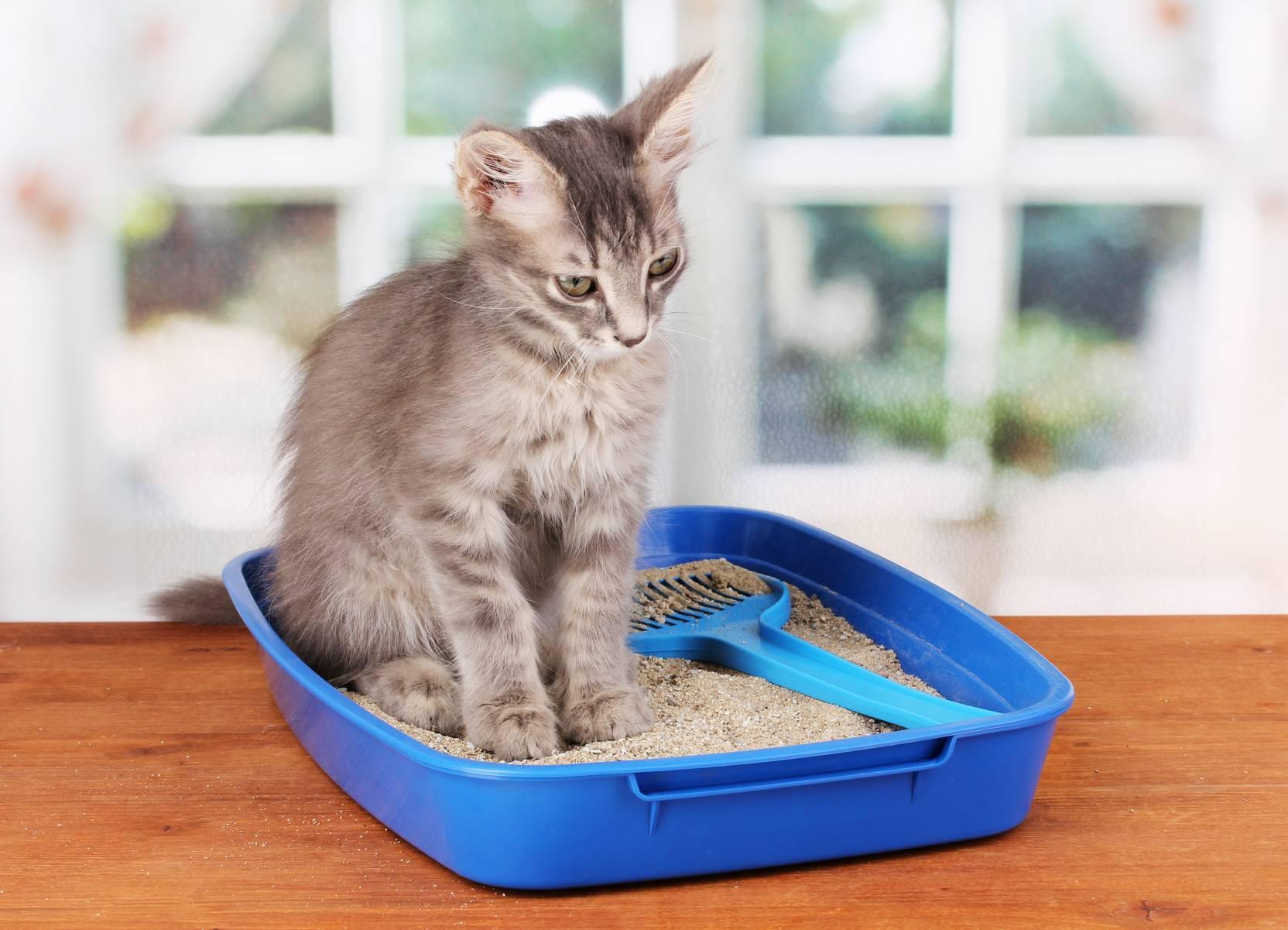 Котенок не пьет воду - что делать? котенок не пьет воду - что делать?