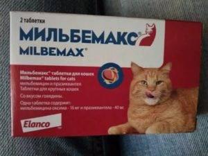 Какая температура у кошки считается нормальной