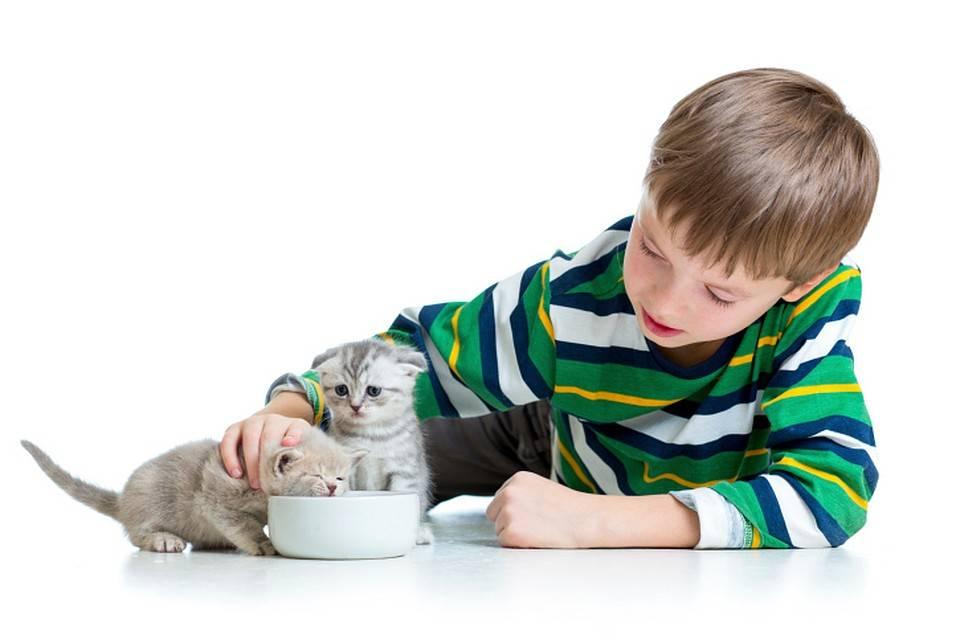 Как воспитать котенка послушным