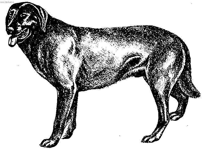 Собаки со складками — обзор морщинистых (складчатых) пород с фото и названиями