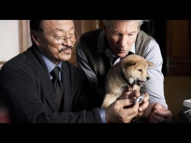Порода хатико – достояние японии и добрый друг человека