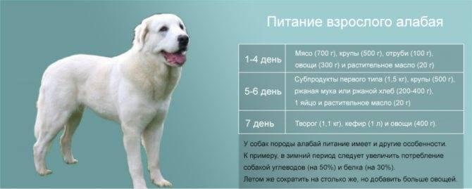 Вес лабрадора — по месяцам, взрослой собаки, мальчика и девочки