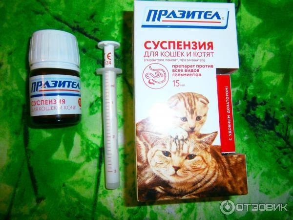 Празител: суспензия и таблетки для кошек и собак, инструкция
