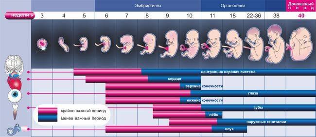 Сколько длится беременность у кроликов: признаки беременности у кроликов, поведение крольчихи перед окролом
