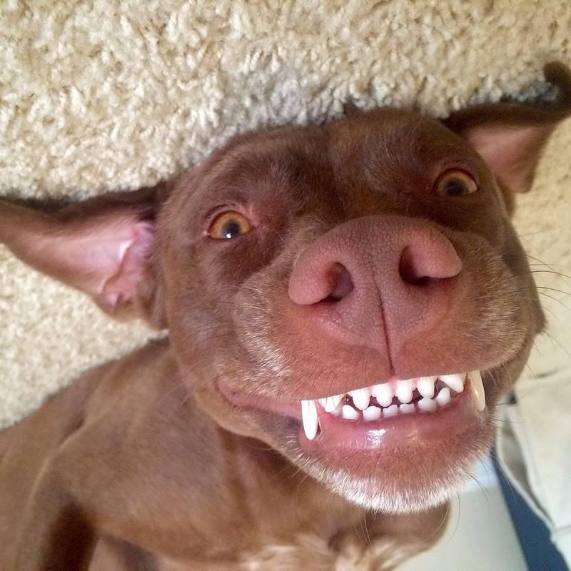 Смешные картинки животных. 200 самых ржачных фото зверей