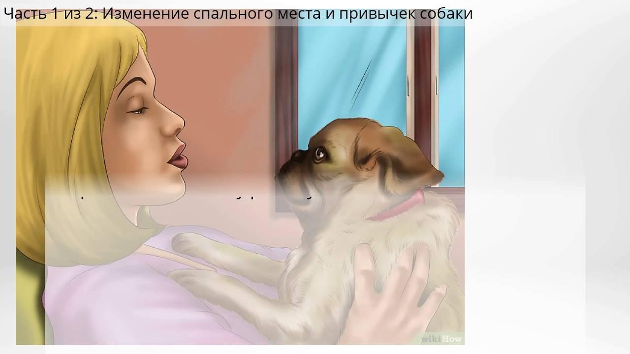 Как приучить щенка ночью спать. как приучить щенка спать ночью: полезные советы как приучить щенка спать на своем месте