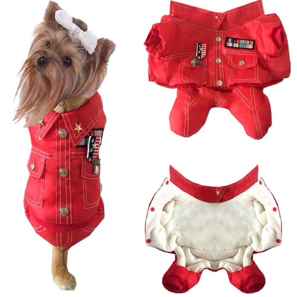 ᐉ одежда для собак: зачем нужна и как правильно подобрать - ➡ motildazoo.ru