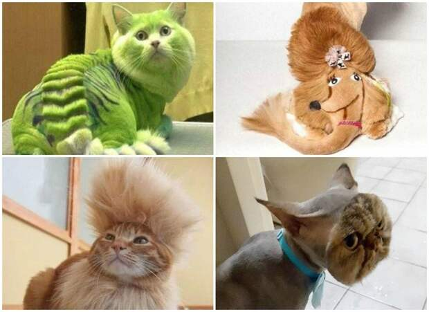 Как подстричь когти кошке в домашних условиях правильно