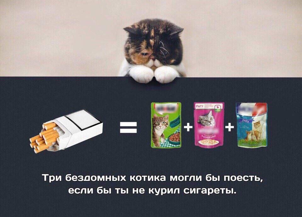 10 «нельзя» для хозяина кошки