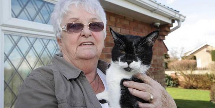 Сколько живут коты: рейтинг котов долгожителей - gafki.ru
