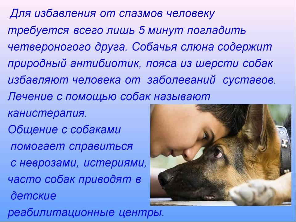 Как успешно приручить взрослую собаку или щенка