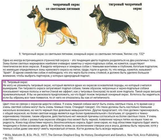 Восточно-европейская овчарка: фото, характеристика породы | собаки мира