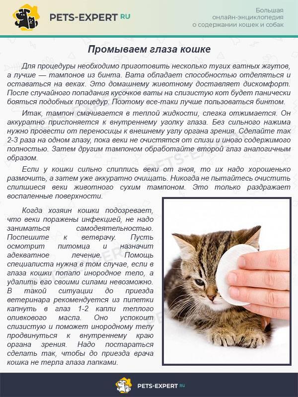 Как оставить кота дома на время отпуска