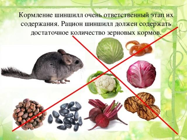 Ласка животное. образ жизни и среда обитания ласки | живность.ру