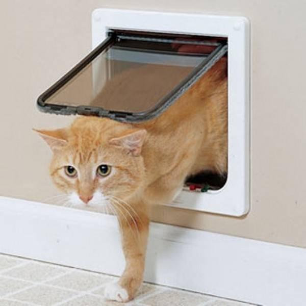 Как выбирать дверцу для кошки в дверь для туалета: можно ли сделать самому