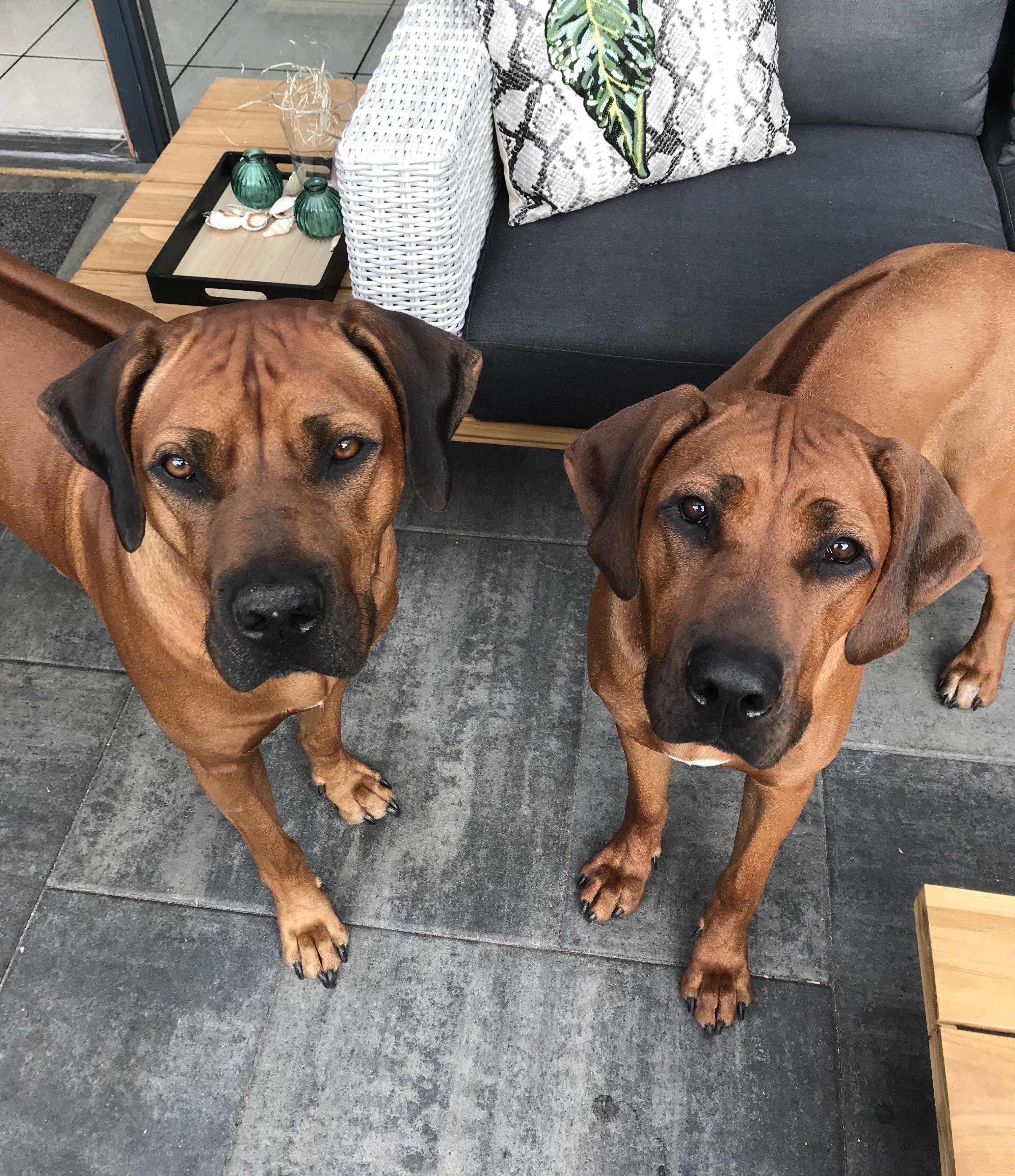 Лучшие сторожевые собаки для охраны частного дома