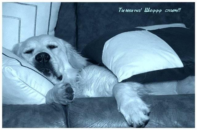 Как заставить щенка спать ночью