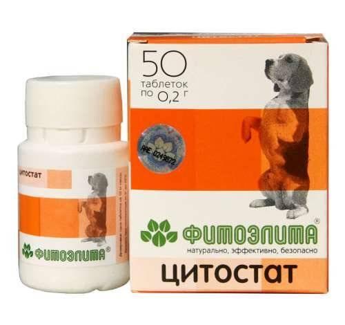 Беременность у собак: первые симптомы, сроки и особенности