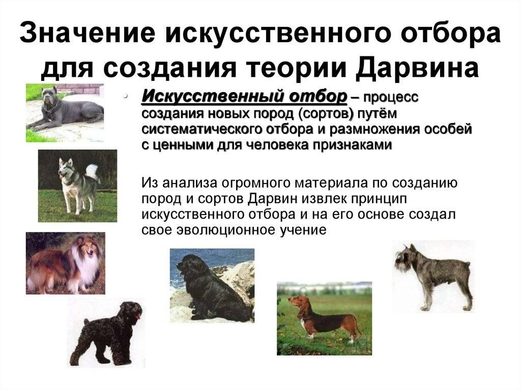 Кто такие служебные собаки, породы и особенности их характера