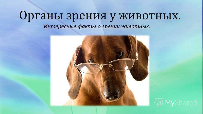 Как собаки видят окружающий мир