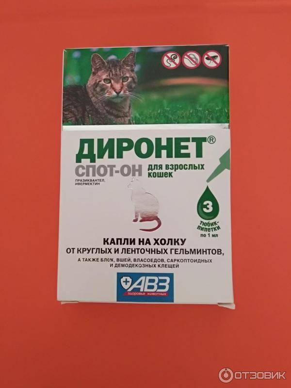 Диронет для кошек: эффективный препарат против паразитов