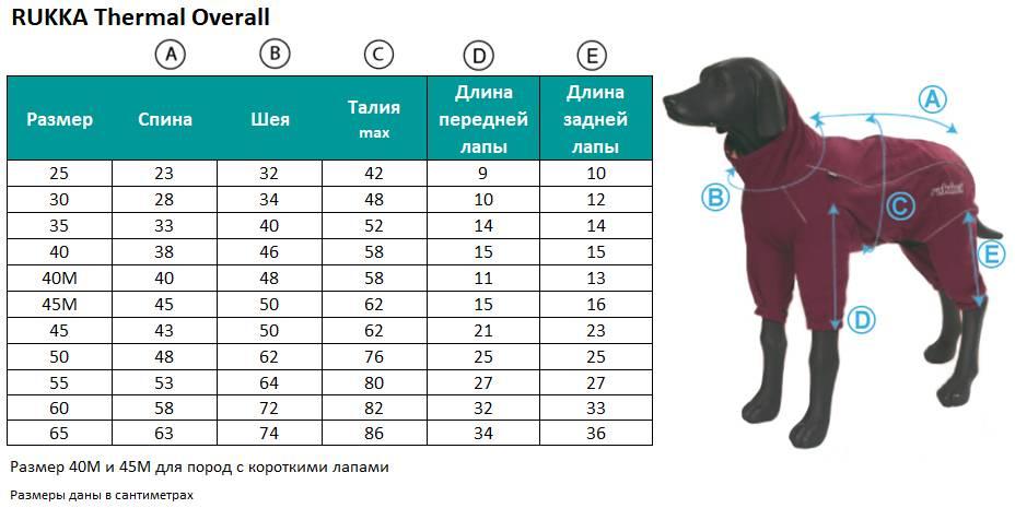 Породы собак для квартиры: как выбрать и содержать?